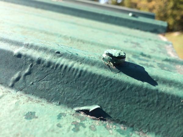 Metal Roof Repair- 5 Common Causes of Metal Roof Leaks