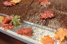 ShurFlo Leaves