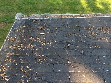 Tree Debris causes damage.jpg