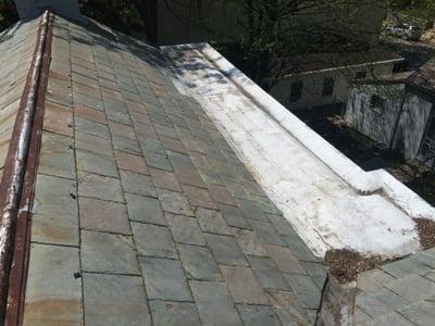 Shingle_Roof_RepairBox_Gutter-_Ivy_Vine.jpg