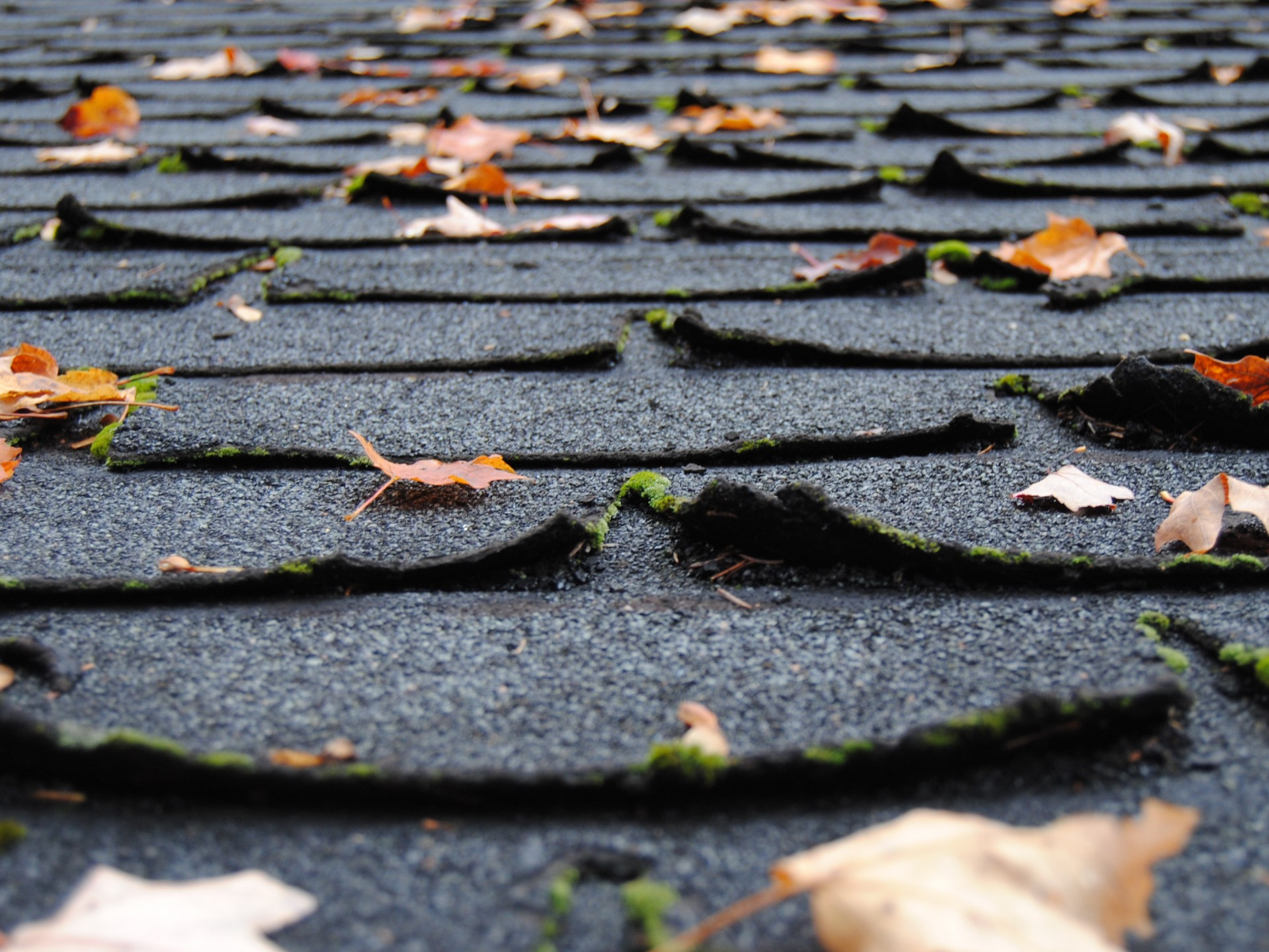 Essential Maintenance Tips for Varying Roof Types